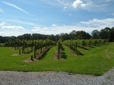 Serenberry Vineyard